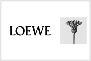 loewe perfumes